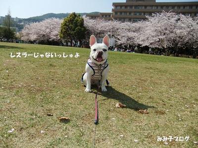 Mimiko_1527