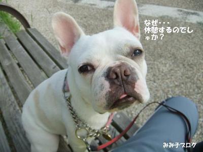 Mimiko_1706_3