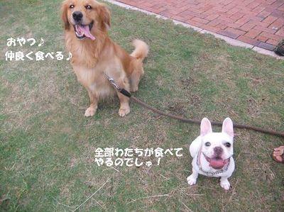 Mimiko_052