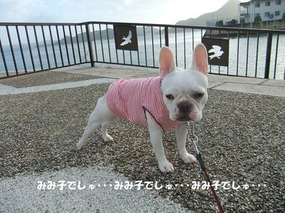 Mimiko_081_2