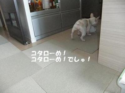 Mimiko_161