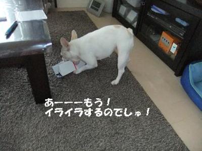 Mimiko_162