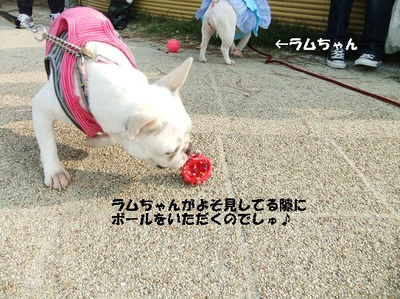 Mimiko_224