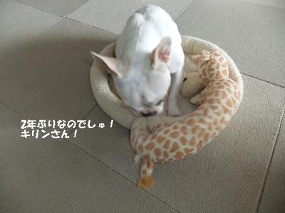 Mimiko_245