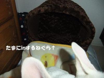 Mimiko_254