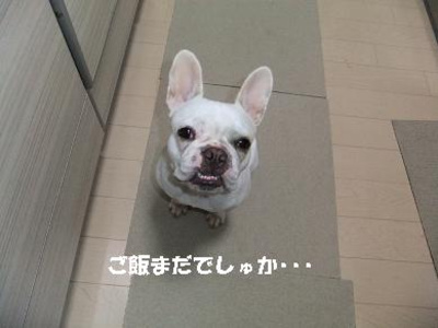 Mimiko_592_2