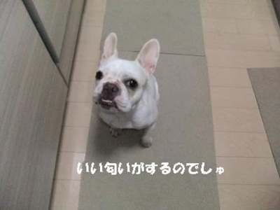Mimiko_593