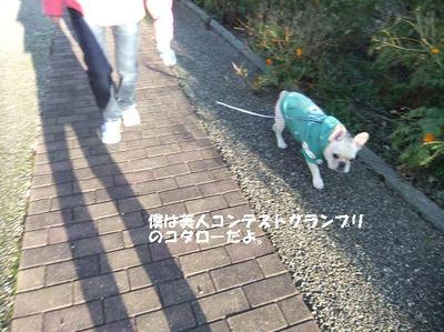 Mimiko_655