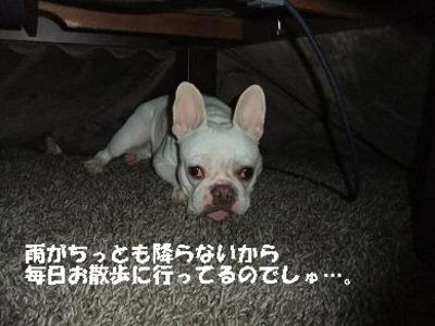 Mimiko_8192