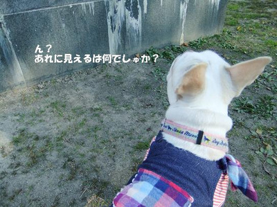 Mimiko_8210