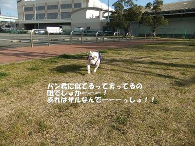 Mimiko_8218