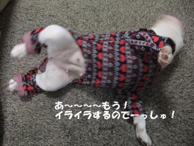 Mimiko_8279