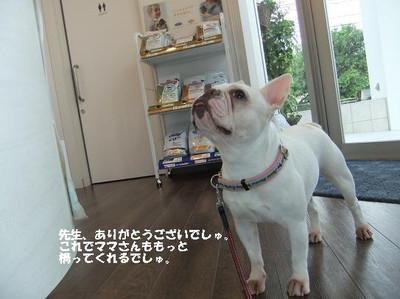 Mimiko_2010