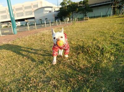 Mimiko_2151
